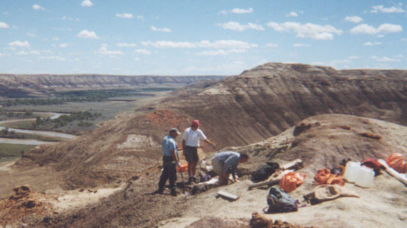 Researchers collect the skull of Albertaceratops nesmoi at a dig site in Alberta. Dinosaur Provincial Park in Alberta is part of the New 7 Wonders of Nature competition. (Cleveland Museum of Natural History/Associated Press)