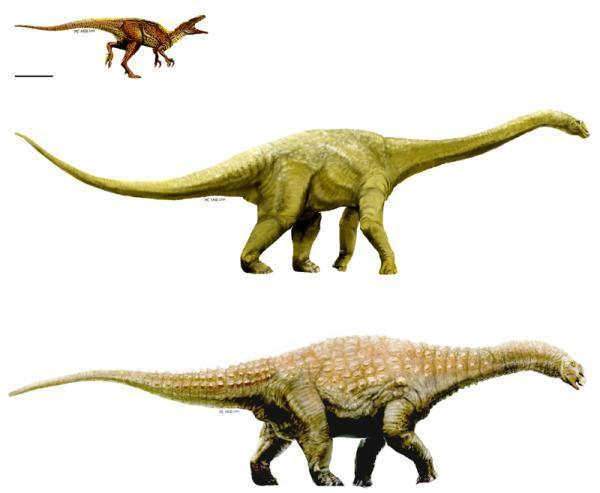 Artistic representations of the three new Australian dinosaur taxa: Australovenator (top); Wintonotitan (middle); Diamantinasaurus (bottom). (Credit: Artwork by: T. Tischler, Australian Age of Dinosaurs Museum of Natural History / Scott A. Hocknull, Matt A. White, Travis R. Tischler, Alex G. Cook, Naomi D. Calleja, Trish Sloan, David A. Elliott. New Mid-Cretaceous (Latest Albian) Dinosaurs from Winton, Queensland, Australia. PLoS ONE, 2009; 4 (7): e6190 DOI: 10.1371/journal.pone.0006190)